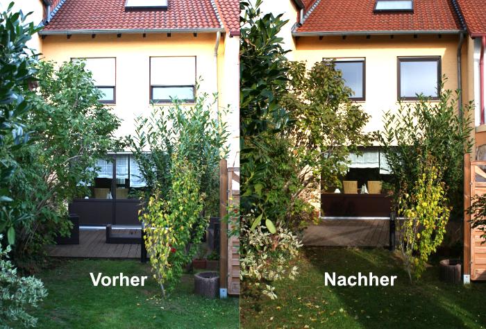 Fensteraustausch gleiche Optik