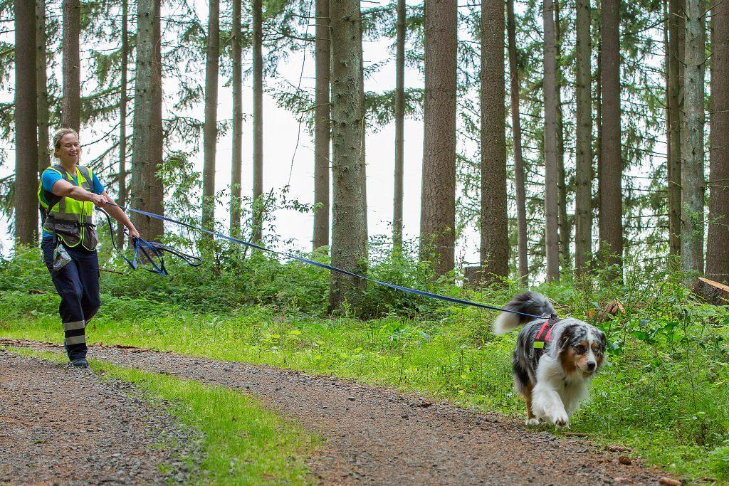 Suchhund-Team im Einsatz